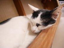 сонный тайский кот стоковое изображение