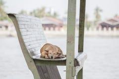 Сон бездомной собаки на деревянном стуле в павильоне Стоковое Фото