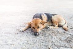 Сон бездомной собаки на тротуаре Стоковые Изображения RF