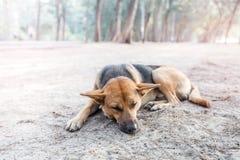 Сон бездомной собаки на тротуаре Стоковая Фотография