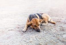 Сон бездомной собаки на тротуаре Стоковое Изображение