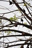 Сон летучих мышей Стоковая Фотография