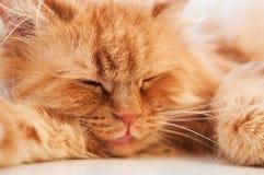 сон имбиря кота Стоковые Фотографии RF