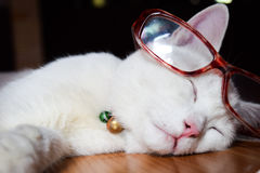 Сон кота имеет красные стекла Стоковые Фотографии RF