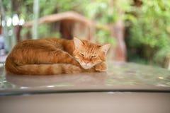 Сон кота на автомобиле крыши Стоковое Изображение RF