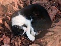 Сон кота на коричневых лист Стоковое фото RF