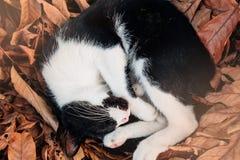 Сон кота на коричневых лист Стоковое Изображение RF