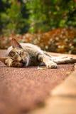 Сон кота Стоковые Фотографии RF