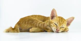 Сон кота Стоковая Фотография