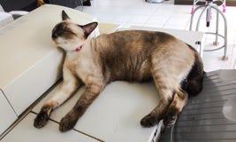 Сон кота Стоковые Изображения