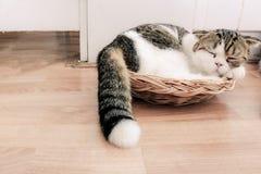 Сон кота Стоковое Фото