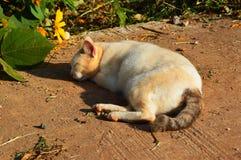 Сон кота Стоковое Изображение