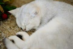Сон кота Стоковая Фотография RF