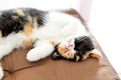 Сон кота Стоковое Изображение RF