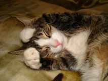 сон кота Стоковое фото RF