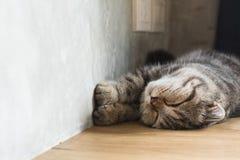 Сон котенка кота в доме на деревянном поле Стоковая Фотография