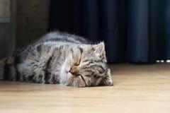 Сон котенка кота в доме на деревянном поле Стоковая Фотография RF
