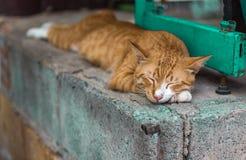Сон цвета кота оранжевый внешний стоковое изображение