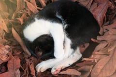 Сон черного кота на коричневых лист Стоковая Фотография RF