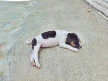 Сон щенка один Стоковые Изображения
