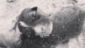 Сон щенка стоковая фотография rf