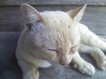 Сон Стоковое фото RF