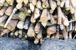 Соотвествующие экологические факторы Экологические факторы, разумные Стоковое Изображение