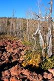 соотечественник лавы пущи поля dixie Стоковые Изображения RF