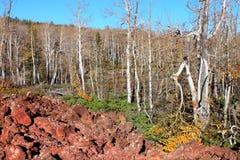 соотечественник лавы пущи поля dixie Стоковая Фотография