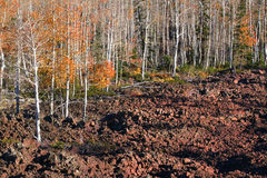 соотечественник лавы пущи поля dixie Стоковое фото RF