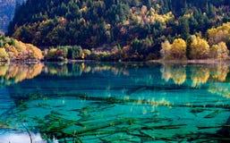 соотечественник jiuzhaigou 16 фарфоров отсутствие парка sicuan Стоковые Изображения RF