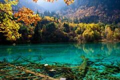 соотечественник jiuzhaigou 9 фарфоров отсутствие парка sicuan Стоковые Фотографии RF