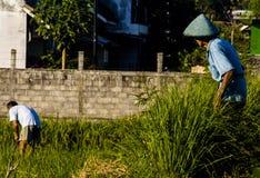 Соперничество фермера Стоковое фото RF