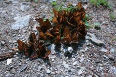сопрягать группы бабочек цветастый Стоковые Фото