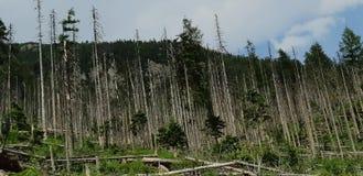 Сорванные древесины стоковые изображения rf