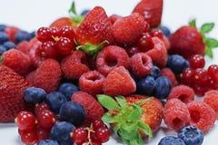 Сортировал свежие ягоды с белой предпосылкой стоковые фото