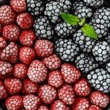 Сортированная, который замерли предпосылка ягод Стоковые Фото