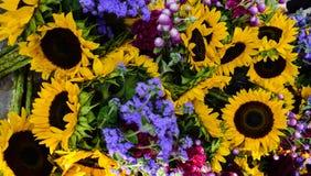 Сортированная предпосылка украшения солнцецвета флористическая стоковое фото rf