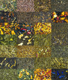Сортированные высушенные листья чая Стоковое Фото