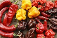 сортированные горячие перцы Стоковая Фотография