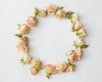 Сортированные головы роз Стоковое фото RF