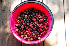 Сортированные зрелые ягоды Стоковые Фотографии RF