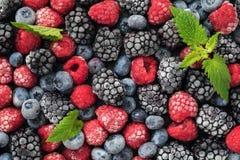 Сортированные, который замерли ягоды поленик, голубик и ежевик Стоковое Фото