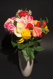 Сортированные розы Стоковое Изображение