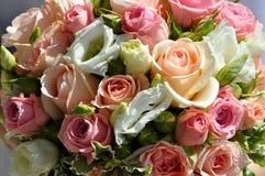сортированные розы Стоковые Фото