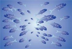 сортированные рыбы Стоковое фото RF