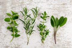 Сортированные свежие травы стоковая фотография