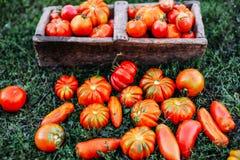 Сортированные томаты в коричневых бумажных сумках Различные томаты в шаре стоковое изображение rf