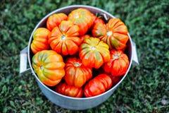 Сортированные томаты в коричневых бумажных сумках Различные томаты в шаре стоковое фото