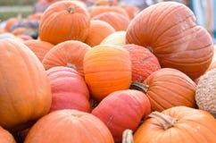 Сортированные тыквы на рынке фермеров Стоковые Фото